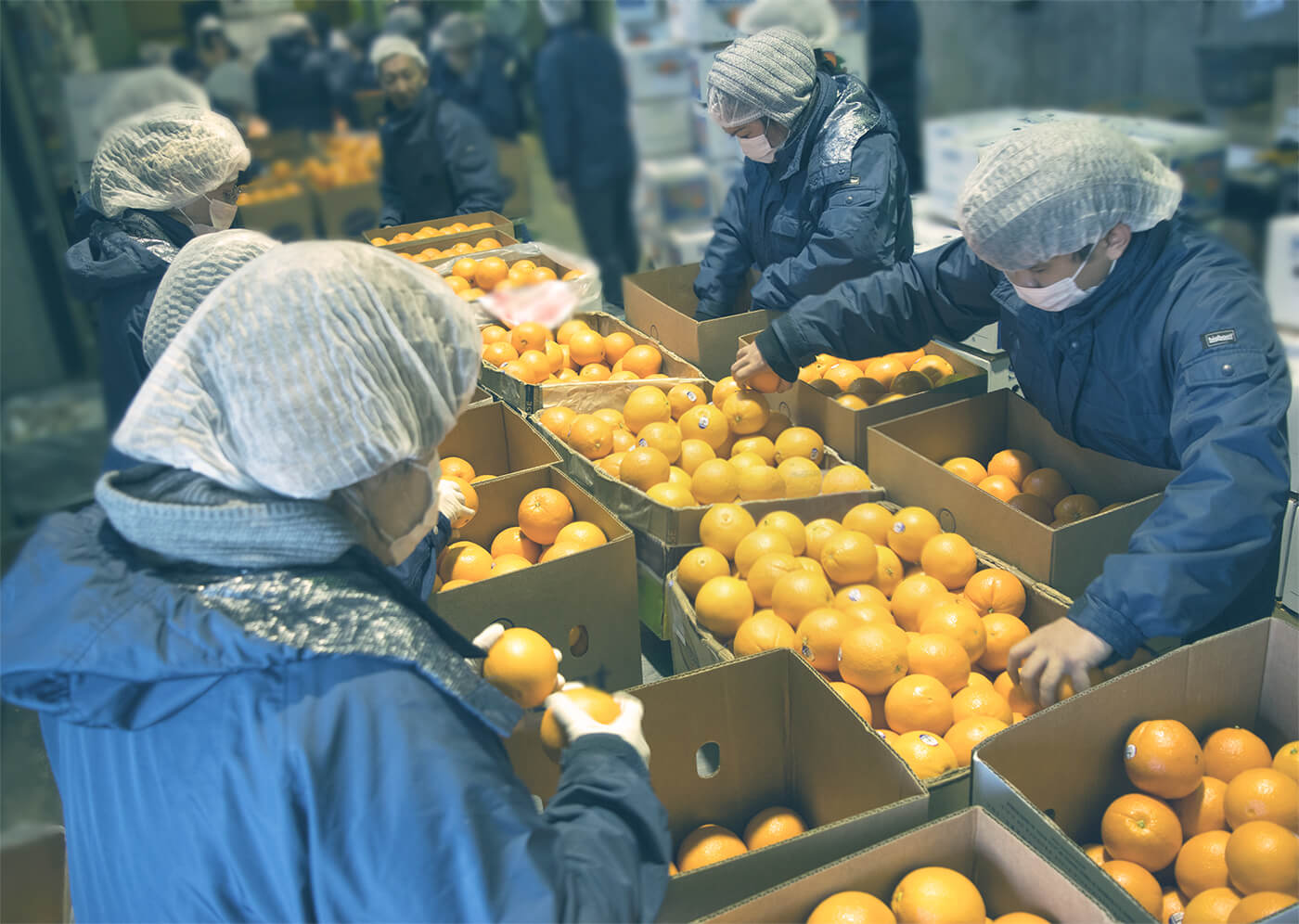 Services For Fresh Fruits & Vegetables